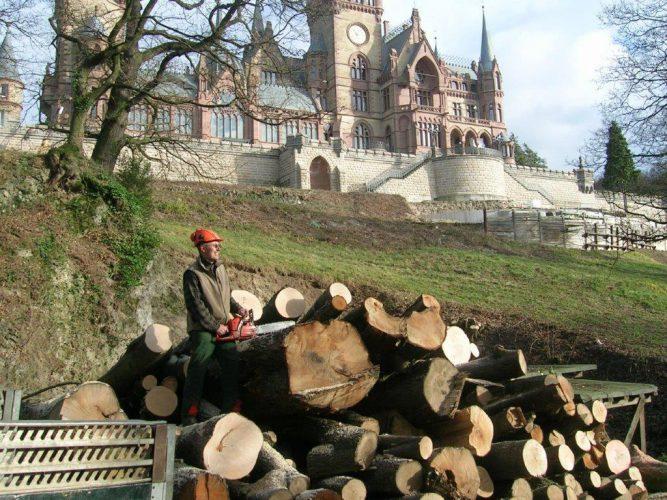 Baumfällung - alle Techniken | Baumdienst